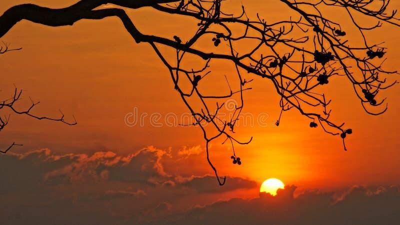 Escena de la puesta del sol con el sol, silueta de la rama del árbol fotografía de archivo libre de regalías