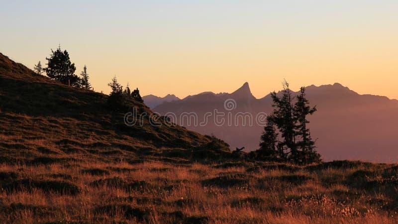 Escena de la tarde en Mt Niederhorn fotografía de archivo libre de regalías