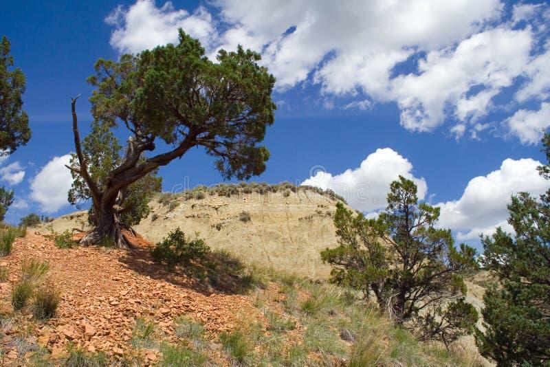 Escena de los Badlands con el árbol de cedro fotos de archivo