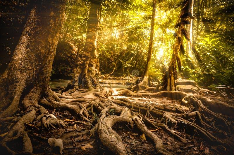 Escena de oro del otoño en un bosque, el sol que brilla a través de los árboles imagenes de archivo