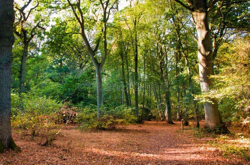 Escena del arbolado en caída del otoño. fotos de archivo libres de regalías