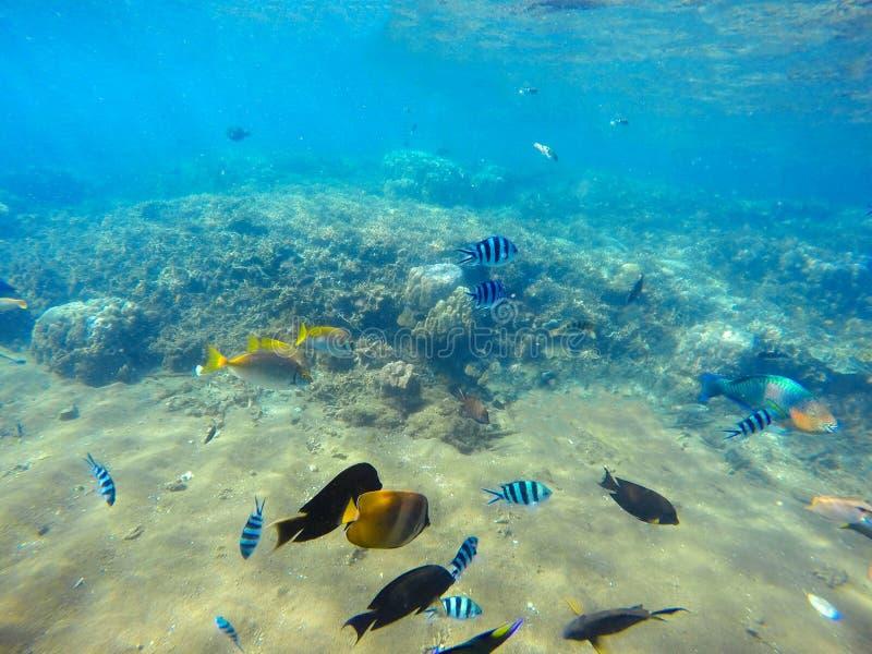 Escena del arrecife de coral con los pescados tropicales coloridos Agua de mar azul con los rayos de la luz del sol imágenes de archivo libres de regalías