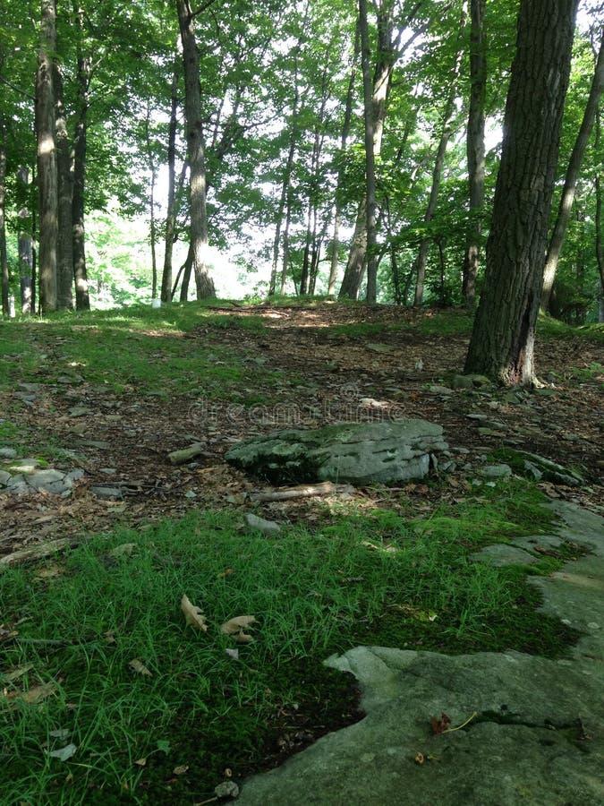 Escena del bosque fotos de archivo libres de regalías