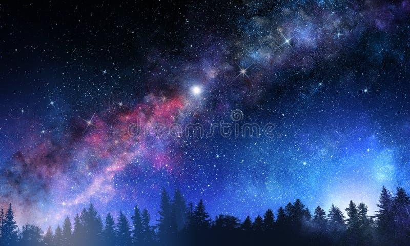 Escena del bosque de la noche imágenes de archivo libres de regalías