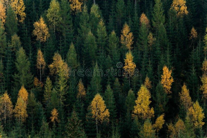 Escena del bosque del otoño Árboles verdes y amarillos que ponen en contraste en un lado de la colina fotos de archivo libres de regalías
