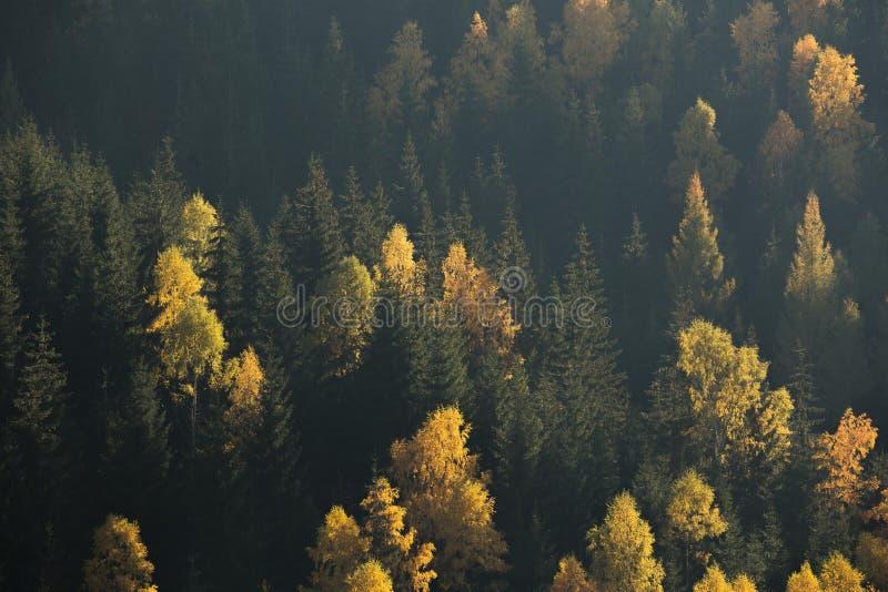 Escena del bosque del otoño Árboles verdes y amarillos que ponen en contraste en un lado de la colina foto de archivo