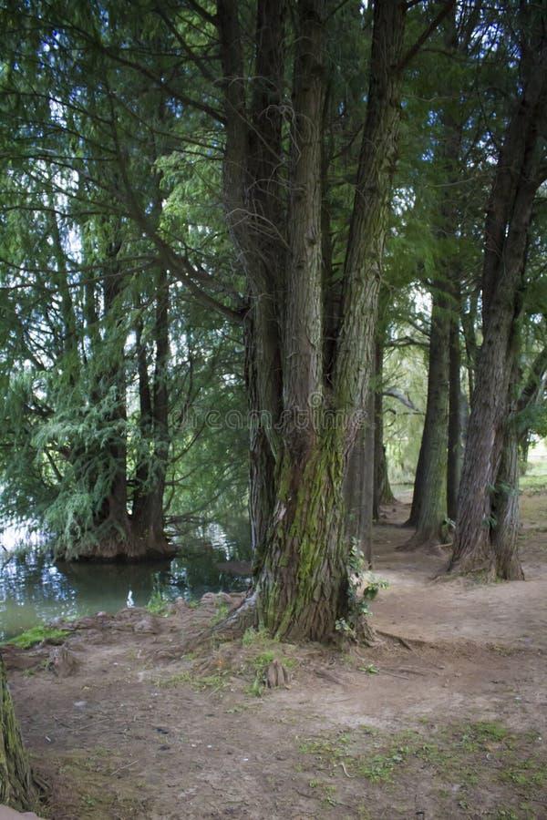 Escena del bosque y del lago imagenes de archivo