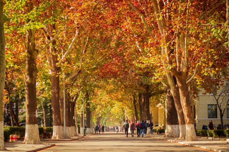 Escena del camino de la caída en universidad fotografía de archivo libre de regalías