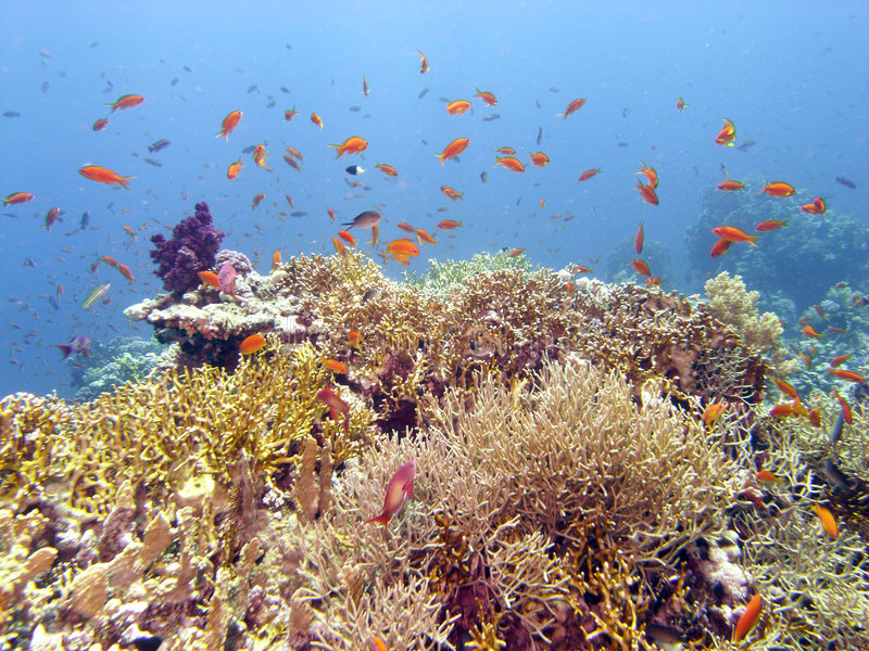 Escena del filón con el coral y los pescados fotografía de archivo