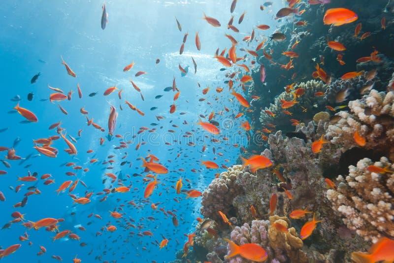 Escena del filón coralino imagen de archivo libre de regalías