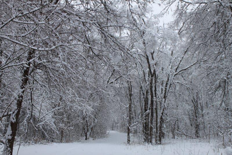 Escena 1 del invierno fotografía de archivo libre de regalías
