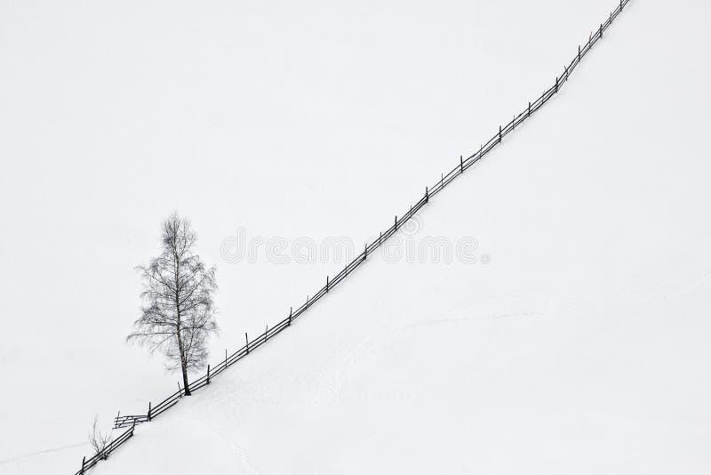 Escena del invierno con el árbol y la cerca de madera fotos de archivo