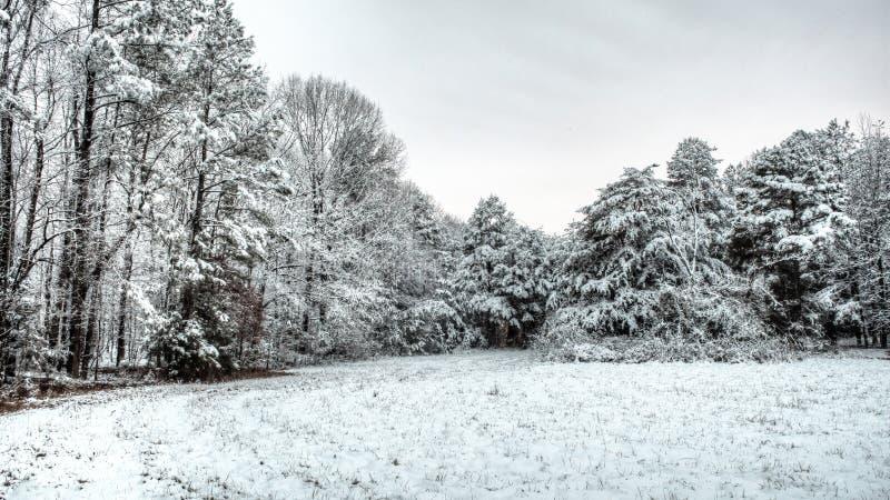 Escena del invierno de la nieve en un campo y árboles imágenes de archivo libres de regalías