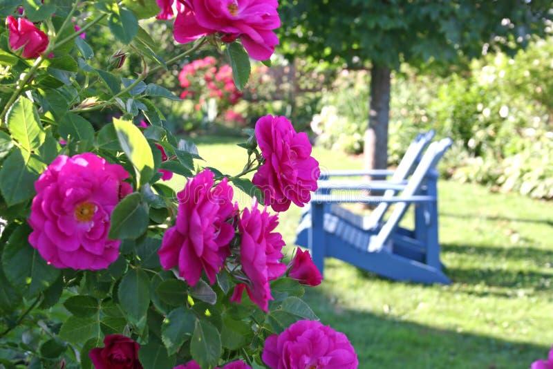 Escena del jardín fotografía de archivo libre de regalías
