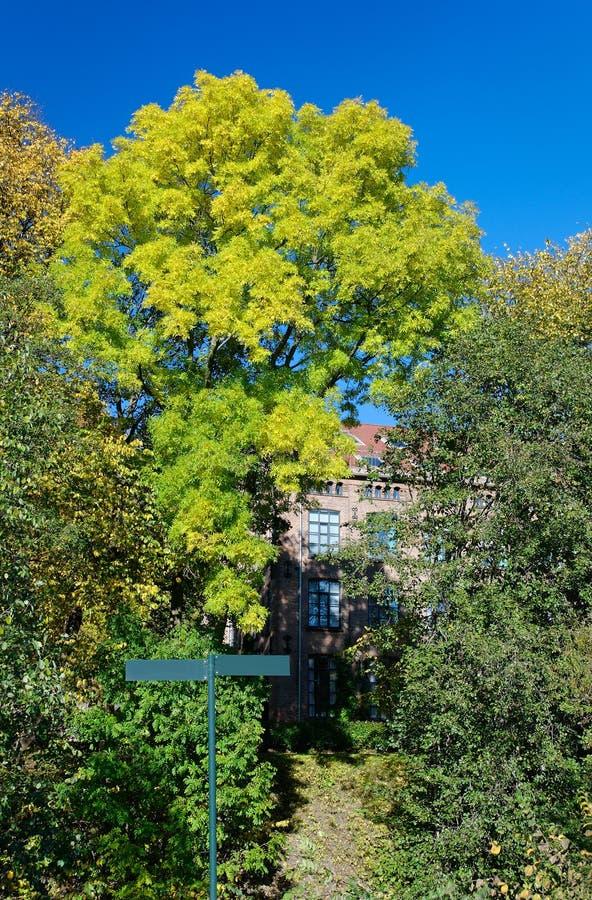 Escena del otoño imágenes de archivo libres de regalías