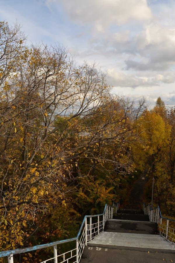 Escena del otoño con la escalera abajo en el parque ?rboles con follaje amarillo Temporada de oto?o fotografía de archivo libre de regalías