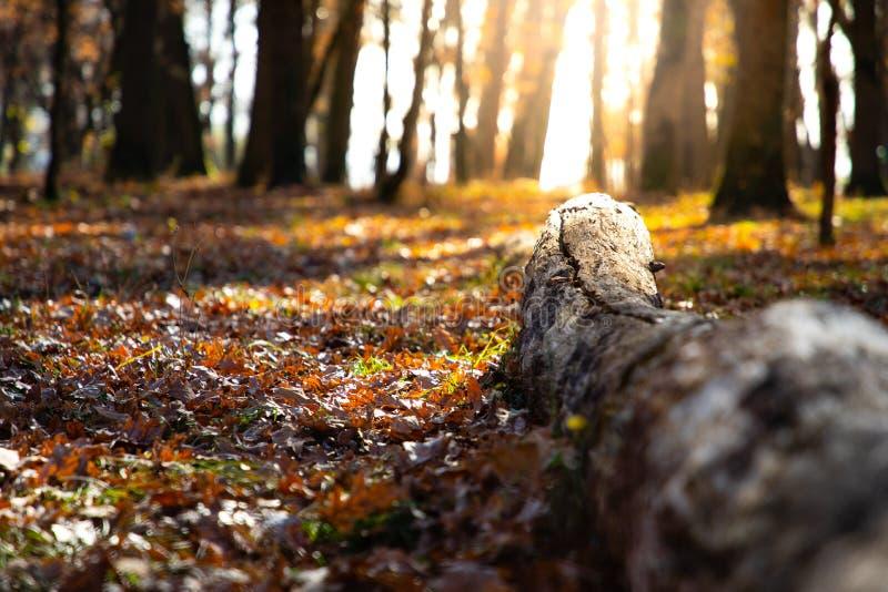 Escena del otoño con un tronco caido y una luz del sol de oro imagenes de archivo