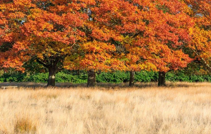 Escena del otoño en Richmond Park imágenes de archivo libres de regalías