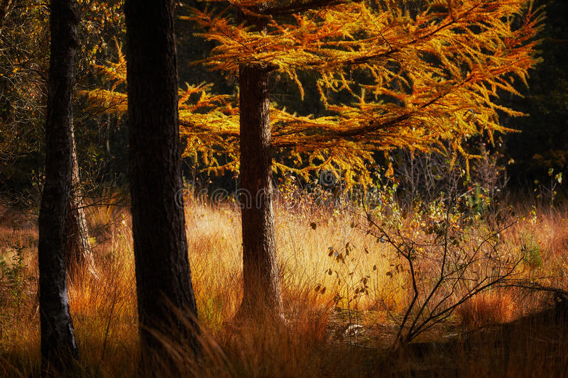Escena del otoño en un bosque oscuro fotos de archivo libres de regalías