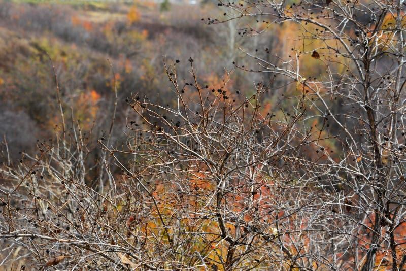 Escena del otoño Ramas agraciadas en el fondo de árboles borrosos con las hojas brillantes en el bosque fotografía de archivo libre de regalías