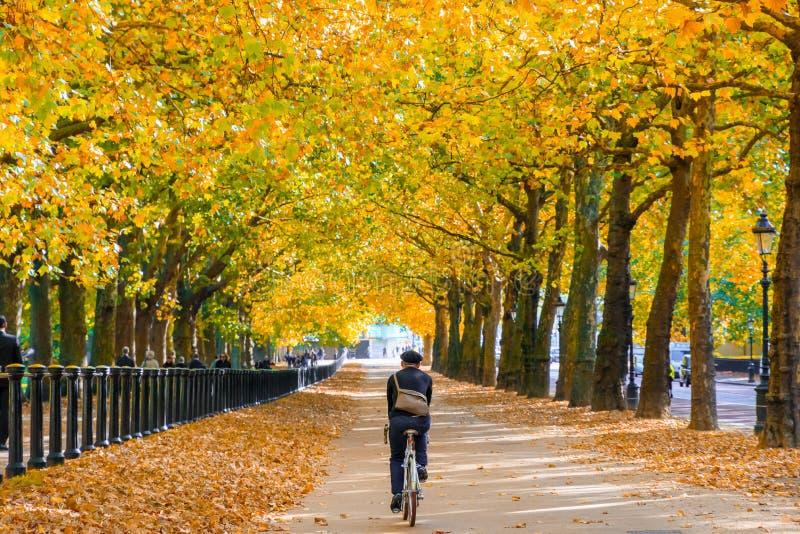 Escena del otoño, un montar a caballo del ciclista a través del camino de la colina de la constitución alineado con los árboles e fotografía de archivo libre de regalías