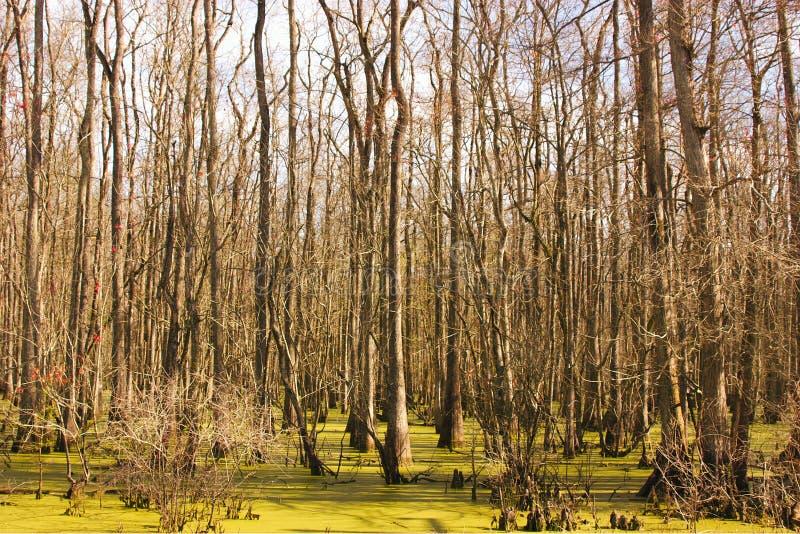 Escena del pantano imagen de archivo