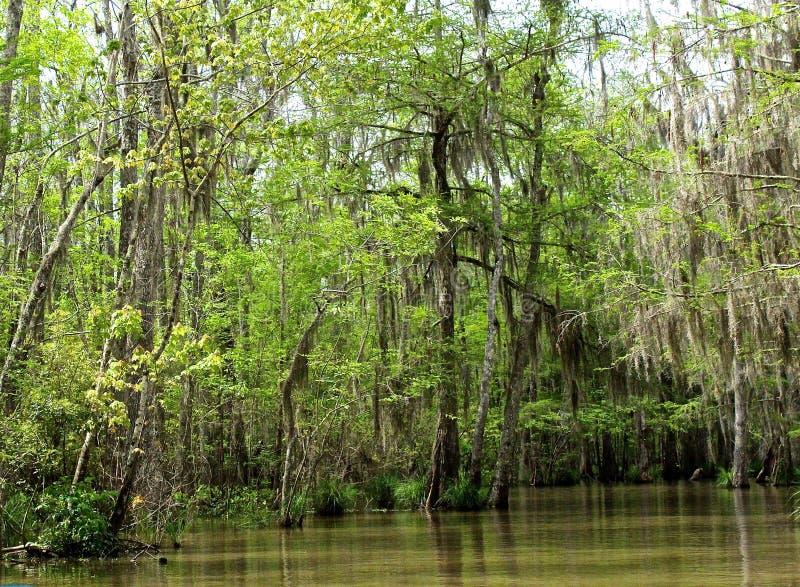 Escena del pantano foto de archivo libre de regalías