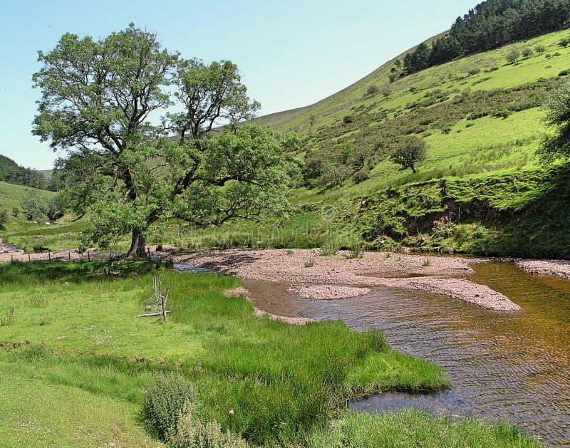 Escena del río del arbolado Galés imagenes de archivo