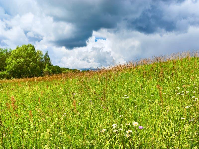 Escena del verano foto de archivo