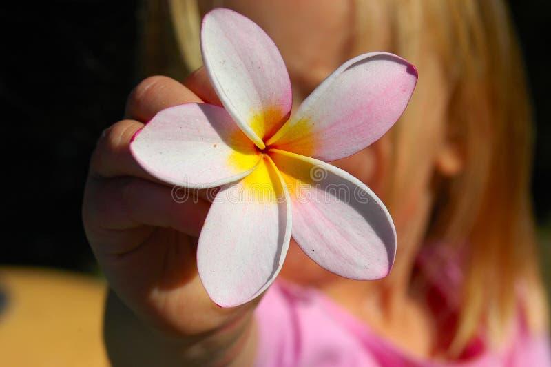 Escena del verano de la potencia de flor fotografía de archivo libre de regalías