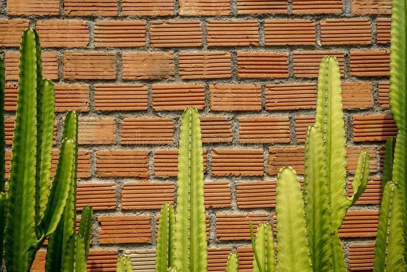 Escena del verano del fondo anaranjado áspero de la pared de ladrillo y del mortero con la planta de desierto verde fresca hermos foto de archivo