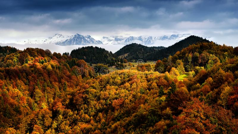 Escena en Rumania, paisaje hermoso del invierno y del otoño de montañas cárpatas salvajes fotografía de archivo libre de regalías