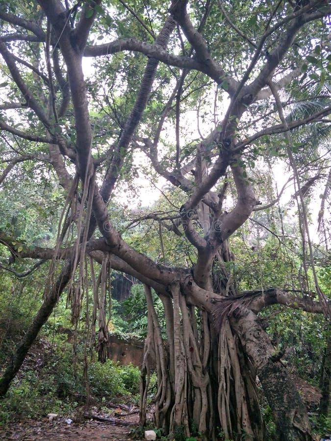 escena extraña del horror del árbol fotografía de archivo
