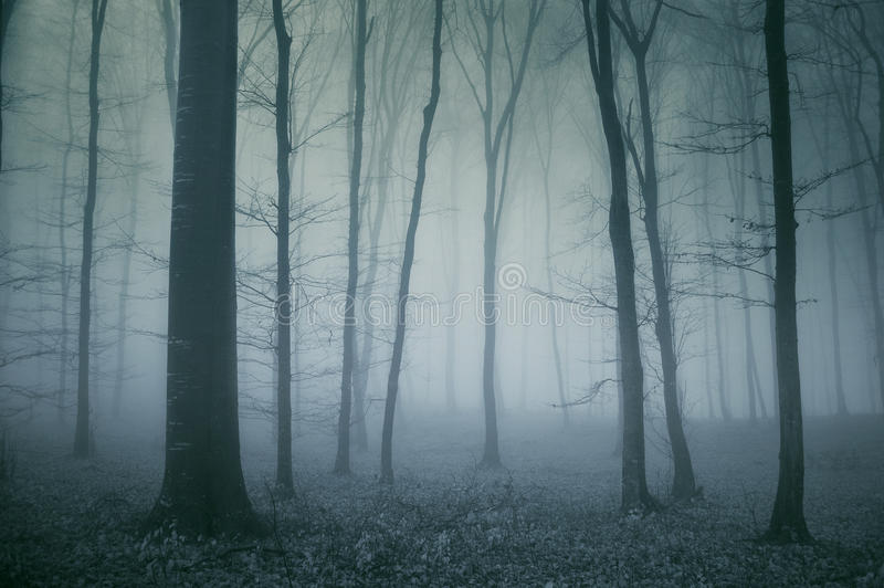 Escena fantasmagórica de un bosque oscuro