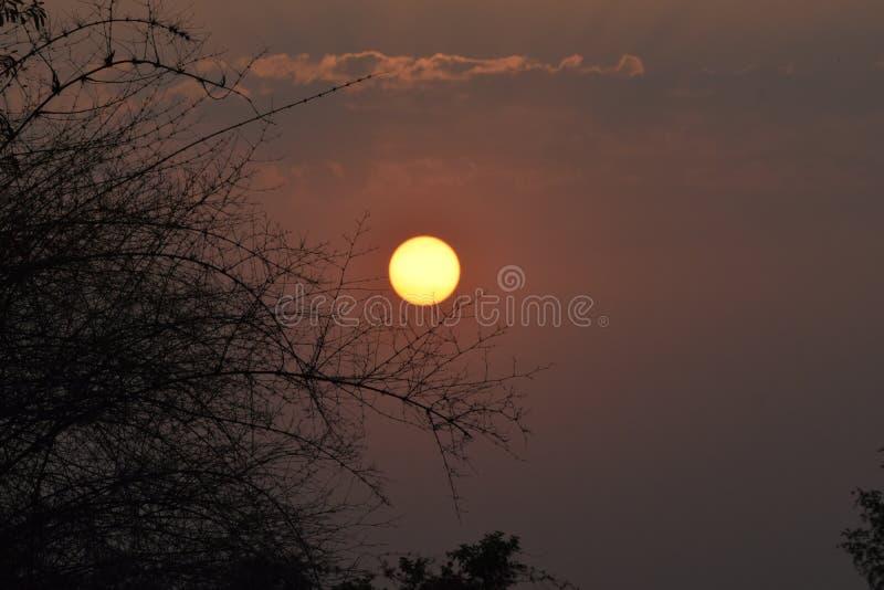 Escena hermosa con Sun y el árbol fotografía de archivo