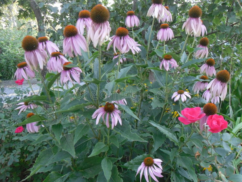 Escena hermosa de la flor fotografía de archivo libre de regalías