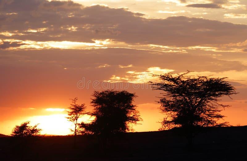 Escena hermosa de la puesta del sol en el Masai Mara, Kenia imagenes de archivo