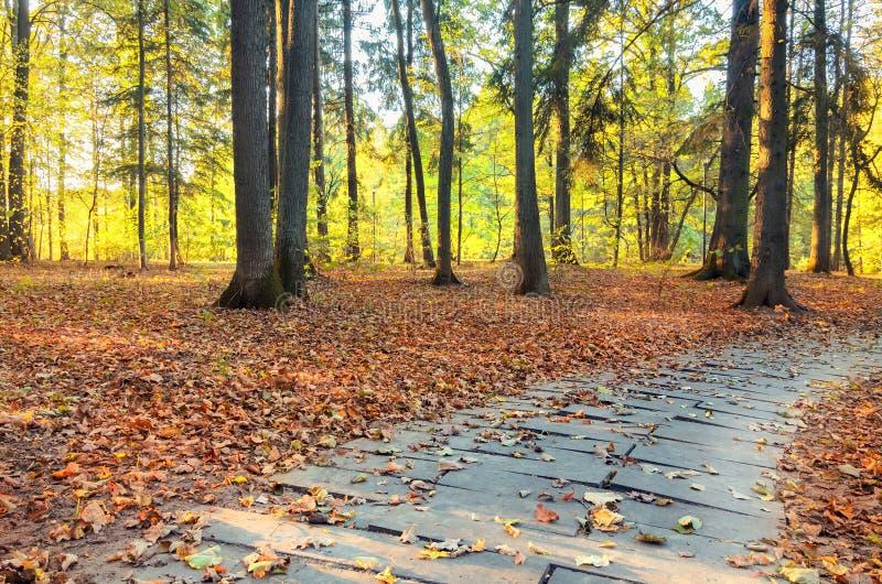 Escena hermosa de la tarde en parque del otoño imágenes de archivo libres de regalías