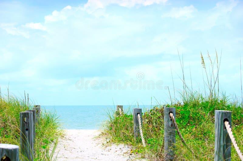 Escena hermosa del camino de la playa con la avena del mar fotos de archivo