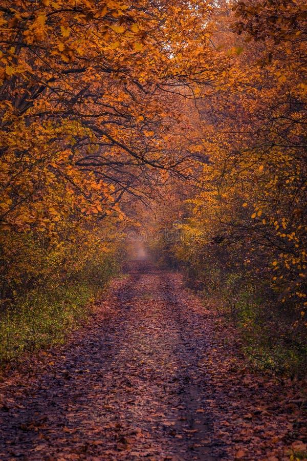 Escena hermosa del camino forestal por la mañana con un poco de niebla foto de archivo