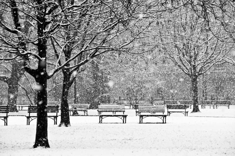 Escena hermosa, pacífica de un parque durante un invierno imagen de archivo libre de regalías