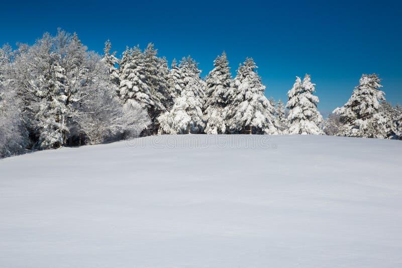 Escena idílica del invierno con el bosque y la nieve fresca fotografía de archivo