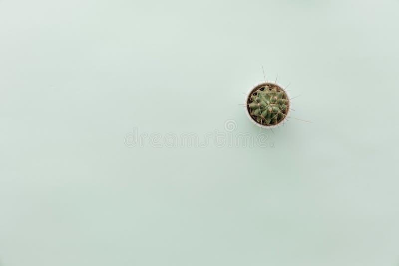 Escena minimalista neutral de la endecha del plano con el florero foto de archivo