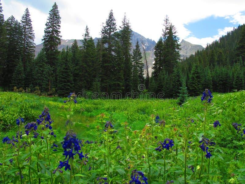 Escena púrpura de la montaña del Wildflower imagen de archivo libre de regalías