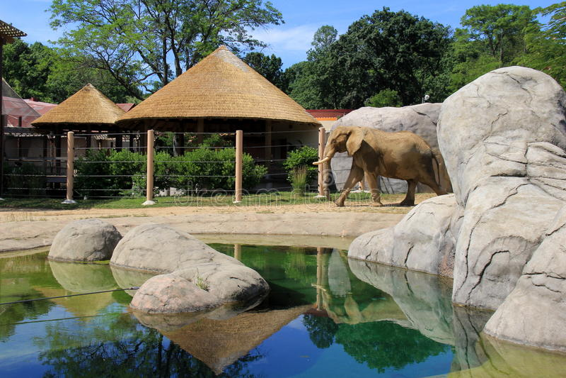 Escena pacífica con el elefante en el hábitat natural, Cleveland Zoo, Ohio, 2016 imagenes de archivo