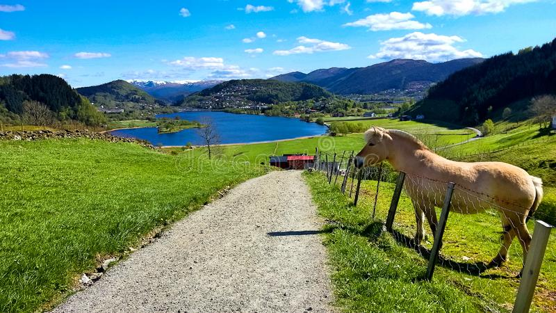 Escena rural con Pony Standing en un prado por el camino en primavera