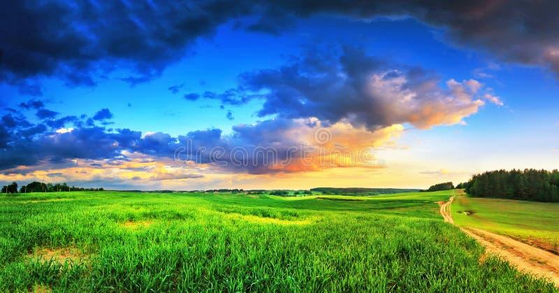 Escena rural de la primavera Campos verdes despu?s de la lluvia de primavera fotografía de archivo libre de regalías
