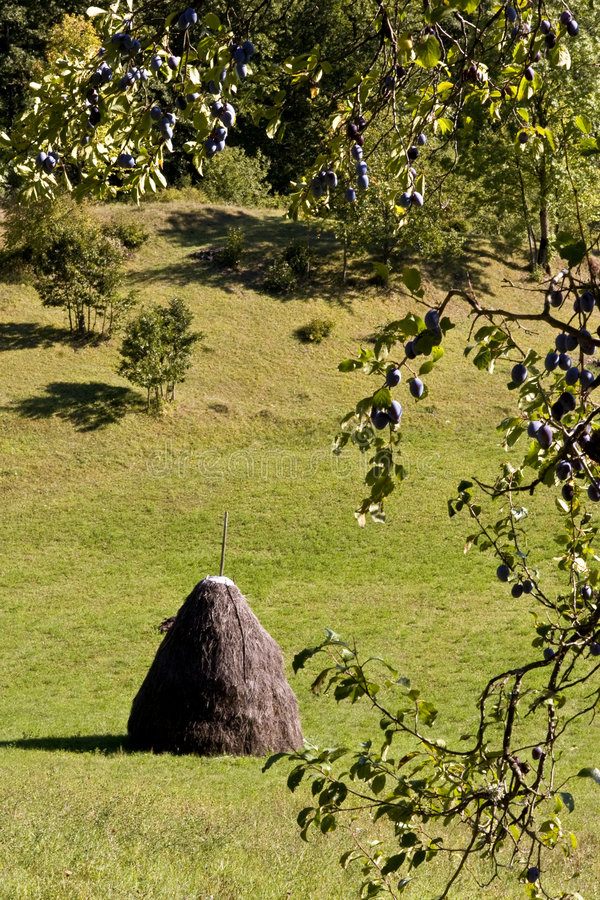 Escena rural del haystack tradicional imagen de archivo libre de regalías