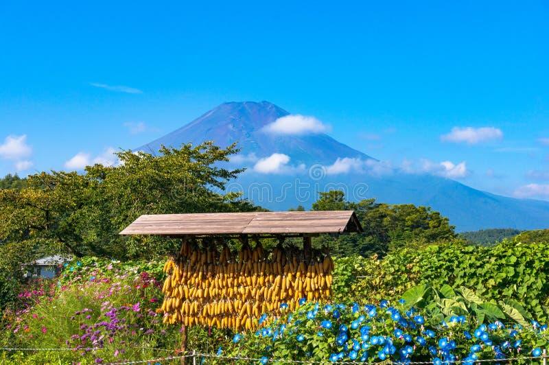 Escena rural japonesa de la agricultura con maíz y el monte Fuji secos imagenes de archivo