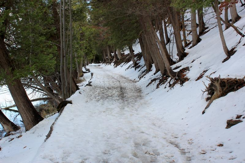 Escena selvática con nieve recientemente caida y luz del sol que fluye a través de árboles a lo largo de una trayectoria de los c fotografía de archivo libre de regalías